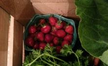summertime strawberries