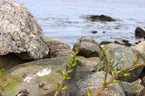 North Hampton Beach, New Hampshire #100DaysofMiaPrima 21
