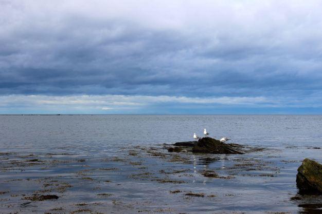 North Hampton Beach, New Hampshire #100DaysofMiaPrima 25