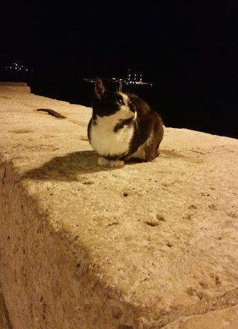 Dubrovnik, Croatia Cat #100DaysofMiaprima