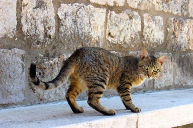 Dubrovnik Cats #100DaysofMiaPrima 2