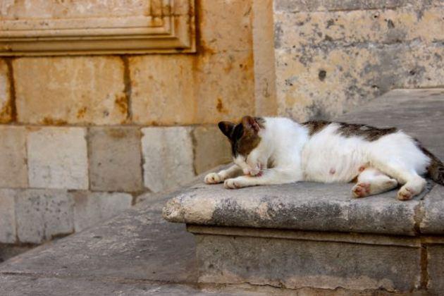 Dubrovnik Cats #100DaysofMiaPrima 5