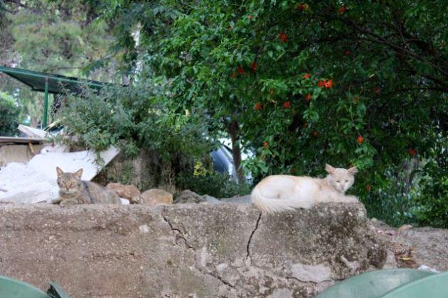 Dubrovnik Cats #100DaysofMiaPrima 6
