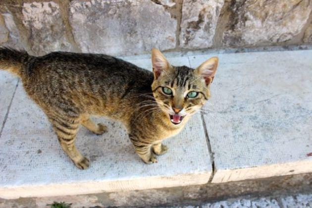 Dubrovnik Cats #100DaysofMiaPrima